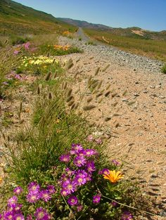 Wheretostay Namibia: Travel Planner & Routes into Namibia Travel Planner, Cape Town, Bed And Breakfast, Lodges, Wild Flowers, Trips, Country Roads, World, Plants