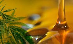 El fin de los mitos, con la marihuana medicinal