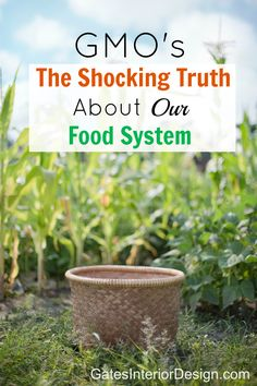 GMOS- the shocking truth about our toxic food system. Do you know what a GMO is? Do you know that you are eating them? Genetically modified organisms are now in most