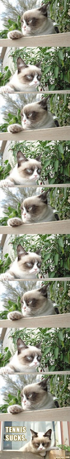 grumpy cat, tennis sucks. Haha, grumpy cat doesn't care that I like tennis; I have to leave her at home : grumpy cat quotes