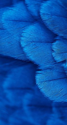 Aesthetic Backgrounds, Blue Backgrounds, Wallpaper Backgrounds, Blue Wallpapers, Iphone Wallpaper, Blue Dream, Love Blue, Black Feather Meaning, Image Bleu