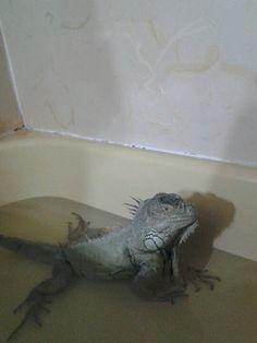 I love my baths