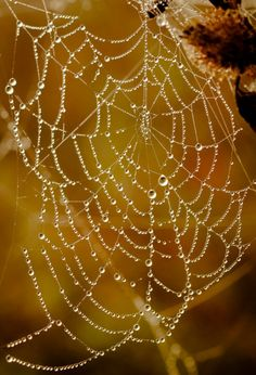 a water jeweled web..... Mother Nature at play! ~ Charlotte (PixieWinksFairyWhispers)