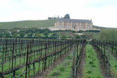 This is the Underwood vineyard where Kenton works as the family vintner (wine maker).