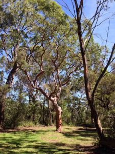 Bushwalking | Simple Crafty Life  Take a short bush walk with us! Lots of grass trees and blackened hollow trees, and a beautiful view at the end. :)