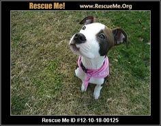 — California Pit Bull Rescue — ADOPTIONS —RescueMe.Org