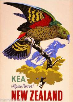 New-Zealand-Kea-Alpine-Parrot-Bird-Vintage-Travel-Advertisement-Art-Poster