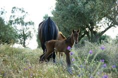 I Like It Wild And Perfect...Always In My Country Portugal !... http://samissomarspace.wordpress.com
