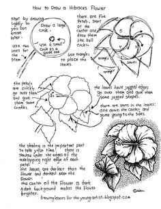 How to Draw Worksheets for The Young Artist: Printable How To Draw a Hibiscus Flower Worksheet Flower Drawing Tutorials, Flower Art Drawing, Floral Drawing, Nature Drawing, Plant Drawing, Art Tutorials, Painting & Drawing, Flower Drawings, Hibiscus Drawing