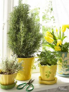 Growing herbs indoors in containers is easier than you think! See how to grow herbs in a sunny window so you can have fresh herbs to use for cooking. Use well-drained soil and place it in a sunny spot. The best herbs to grow indoors are chives, cilantro, mint, oregano and many more of your favorite herbs!