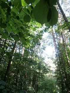 Nature of the  July 25. Photo 12. by varvarajdanova.deviantart.com on @deviantART