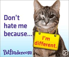 Animal Adoption Special Needs | special needs cats less adoptable pet week