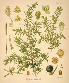 Botanicals on Gin Foundry : Gin Foundry