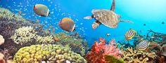 Wallpaper Underwater, Coral Reefs, Panorama, Panorama, Coral Reef, Turtle, Underwater, Turtle, Fishes, Sea, Fish, Sea