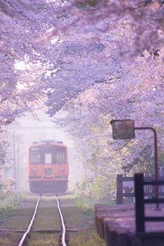 lifeisverybeautiful:  Tsugaru Railway, Japan via 春霞 | PHOTOHITO