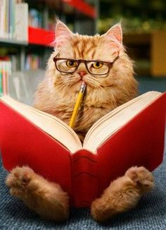 Cat Reading ... so that's what they do all night! Go figure.