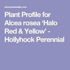 Plant Profile for Alcea rosea 'Halo Red & Yellow' - Hollyhock Perennial