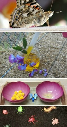 Thank goodness im not grossed out by bugs. boy mom for sure! 18 Ideas for Teaching Kids About Insects