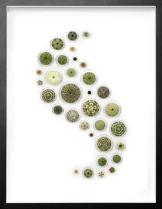 http://www.pheromonegallery.com/products/32x40-urchin-spheres-mosaic/