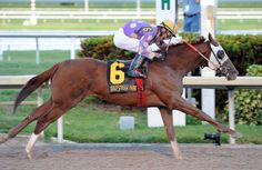 Fellowship(2013)Awesome Of Course- Go Girlfriend Go By Demidorf. 3x5 To Mr. Prospector, 4x4 To Blushing Groom, 4x5 To Northern Dancer. 11 Starts 2 Wins 3 Seconds 3 Thirds. Ran 3rd Florida Derby(G1), Fountain Of Youth(G2), Holy Bull S(G2). Ran 3rd In Every Derby Prep In Fla Because Not Much To Run At In Each Race. The Derby Will Usually Give Him Just That But Will Need A Good Clean Trip Which Is Unlikely.