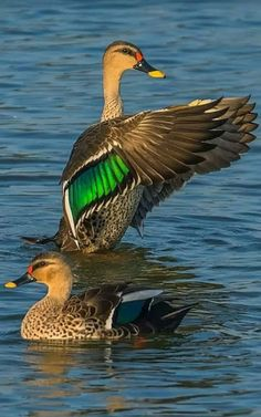 Bird photography and Birding Pretty Birds, Beautiful Birds, Animals Beautiful, All Birds, Love Birds, Bird Pictures, Animal Pictures, Canard Colvert, Animals And Pets