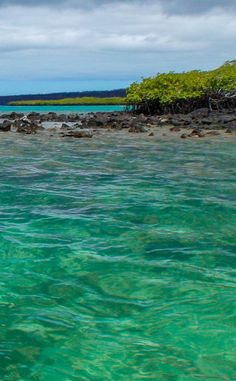 Crystal clear water in the Galapagos Islands // perfect for snorkeling!