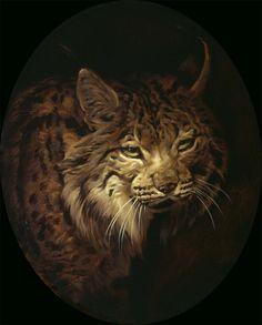 Iberian Lynx Portrait. Wildlife Art of Manuel Sosa. Paintings and Prints