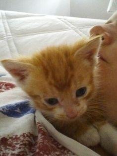 Baby Cinnamon!!!