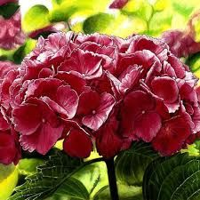 Image result for beautiful nature nicole stocker