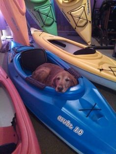 This dog is ready to hit the rapids.