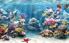 What Happened To Coral Reef ? | STOP OVERFISHING