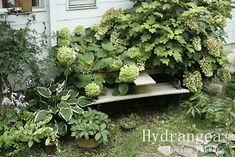 アナベルと柏葉アジサイ Green Garden, Shade Garden, Diy Home Decor On A Budget, Natural Garden, Diy And Crafts, Herbs, Leaves, Landscape, Vegetables