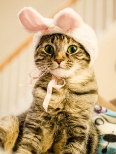 Ready for Easter? Here are 25 cute cats and kittens who are in a festive mood, as they pose next to colored eggs, in baskets, and next to bunny rabbits. Baby Kittens, Cute Cats And Kittens, Cool Cats, Kittens Cutest, Pretty Cats, Beautiful Cats, Easter Cats, Easter Bunny, Gatos Cats