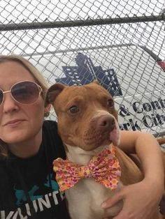 A0933701_Rose ROSE aka EMILY – A0933701 **RETURNED 5/12/16** FEMALE, BROWN / WHITE, AM PIT BULL TER MIX, 4 yrs OWNER SUR – ONHOLDHERE, HOLD FOR ID Reason MOVE2PRIVA Intake condition UNSPECIFIE Intake Date 05/12/2016, From NY 11212, DueOut Date 05/12/2016,