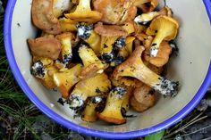 Mushrooms, delicious