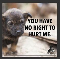 Please Call your local police, animal control or humane society. Please be their voice. Please help me save the Animals Dog Quotes, Animal Quotes, Save Animals Quotes, Dog Love, Puppy Love, Report Animal Abuse, Stop Animal Cruelty, Animal Control, Dogs And Puppies