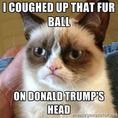 Grumpy Cat  - i coughed up that fur ball  on donald trump's head