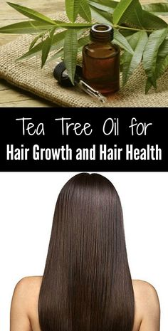 Tea Tree Oil for Hair Growth and Hair Health