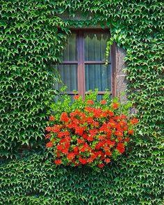 ��������☘️☘️��door  #rose #landscape #flowers #kaktüs #design #sukkulent #topiary #tasarım #mimar #sun #shine #landscape #tree #taş#gross #garden #bahçe #grass  #botanical #green #rose #forest #geofit #ikebana #ornamental #cim #ağaç #çiçek #flowers #peyzaj #peyzajmimari #mimar #pink #rose #green http://turkrazzi.com/ipost/1517258584902977375/?code=BUOYqTpjcdf