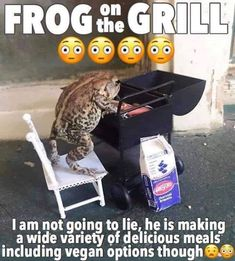 Quirky Frog Memes Because It Ain't Easy Being Green - Memebase - Funny Memes Homestuck, Mtv, Dankest Memes, Funny Memes, True Memes, Haha, Frog Pictures, Look Man, Cute Frogs