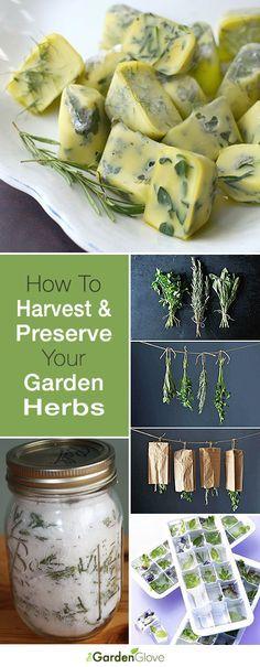 Cómo cosechar y preservar sus Hierbas del Jardín • Grandes consejos y tutoriales!
