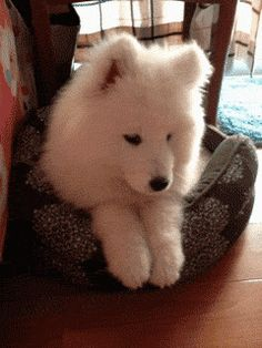 Happy to see you :) - Watch the gif!-Omg..what an adorable dog!!! <3