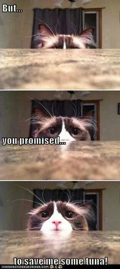 I personally love memes and funny cat memes are my personal favorite. Who could resist adorable images of cats, dogs, and other animals next to a funny tagline? Cat Memes To Make You Laugh Until You Cry! 9gag Funny, Funny Animal Memes, Cute Funny Animals, Cute Baby Animals, Funny Dogs, Funny Memes, Funny Quotes, Humor Quotes, Pet Quotes