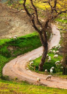 Caminhos... Toscana