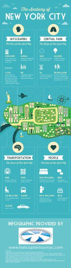 The Anatomy Of New York City - Infographic