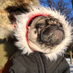 "quitobicoke: ""Trying to soak up the sun's warmth to fight off the cold. It's -28° with the windchill. Keep calm and stay warm!"""