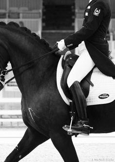 dressage horse photography - Google-søgning