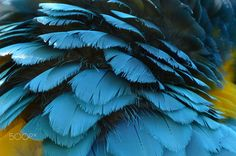 A Macaws Feathers by Amanda Camps on 500px