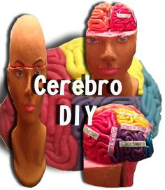 DIY Cerebro de plastilina (Playdough brain)