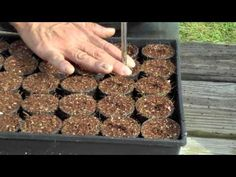 In this video, we show how we seed our net pots for our aquaponics systems and the end results.